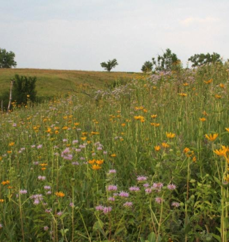 Mixed Grass Prairie Restoration Mix, Conservation Blueprint