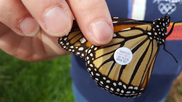 Conservation Blueprint, pollinator habitat and seeds