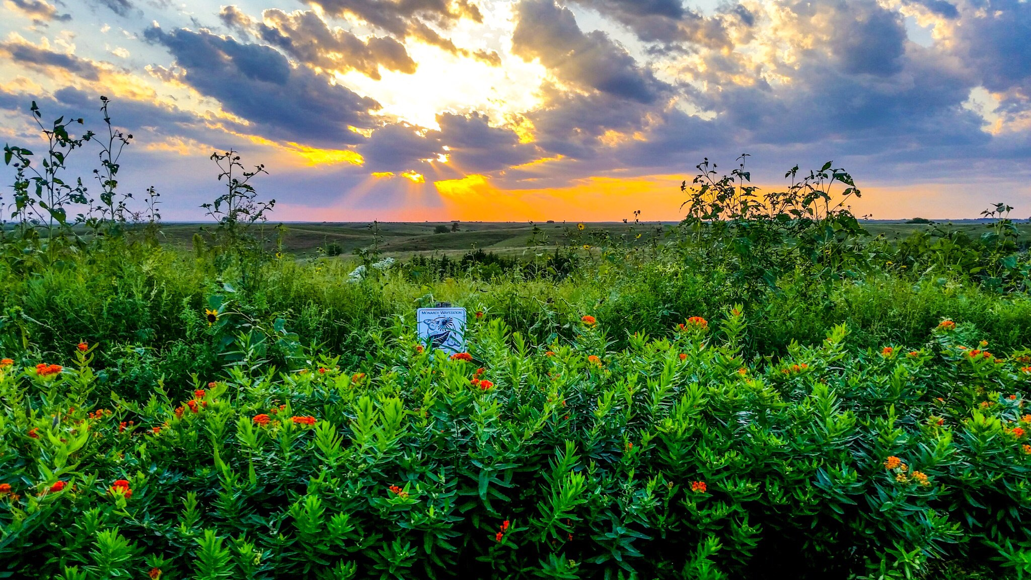 Nebraska native seed plant producers tour conservation blueprint conservation blueprint malvernweather Gallery