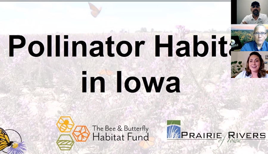 Pollinator Habitat in Iowa
